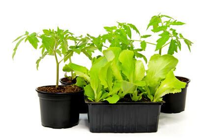 Mini-Gewächshaus Pflanzen